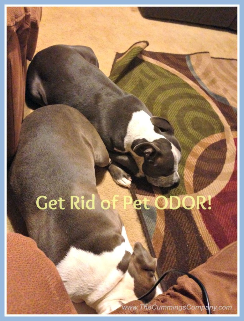Remove Pet odor when Selling Your Home